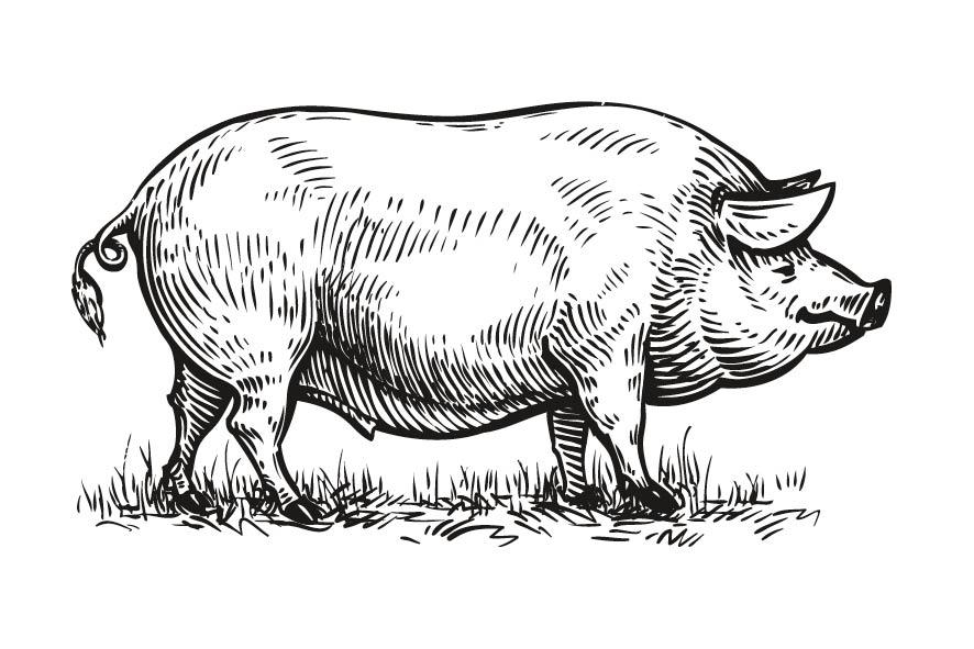 Fleisch - Nose to tail - Schwein