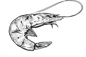 Fisch - Meeresfrüchte - Shrimp
